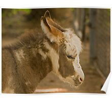 Young Donkey Poster