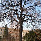 Old oak tree by Maria1606