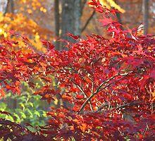 Flaming Autumn  by daphsam