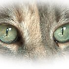 Cat's Eyes #5 by Barry Doherty