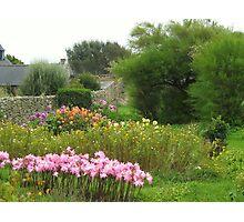 Ushant Flowers Photographic Print