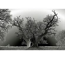 Escot  Photographic Print