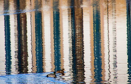 Stripes and Ducks by Lynne Morris