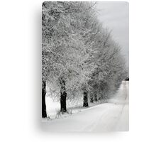 Trees line  in winter pathway from old farm Canvas Print