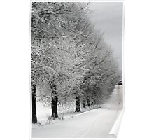 Trees line  in winter pathway from old farm Poster