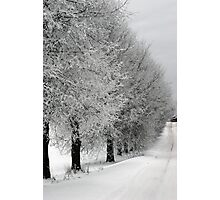 Trees line  in winter pathway from old farm Photographic Print