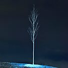 """lone TREE"" by grsphoto"