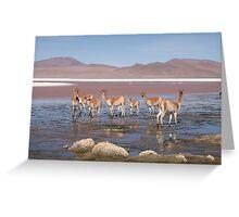 Guanaco in Salt Lakes Greeting Card