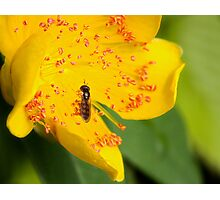 Fly with Bloom Photographic Print