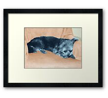 A Dog's Life,  in color Framed Print