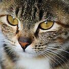 Cat Eyes by Paulette1021