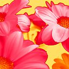 FLOWERS. by Vitta