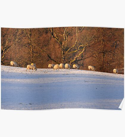 Lakeland Winter Scene Poster