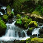 Merriam Falls, Lake Quinault, Wa. by mikeno