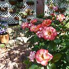 Betty Boop Rose In All Her Glory by joycee