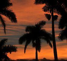 Royal Palm Sunset by David Lee Thompson