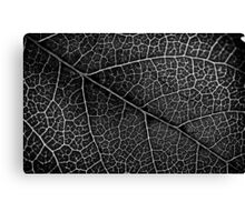 Leaf Projection Canvas Print