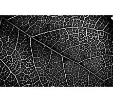 Leaf Projection Photographic Print