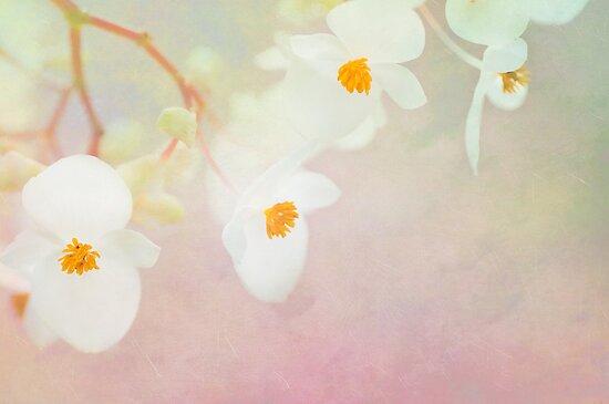 White Begonias by Beth Mason