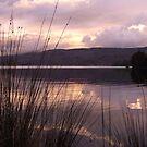 sunset reeds by gaylene