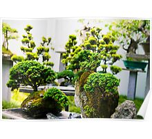 bonsai trees at the chinese garden Poster