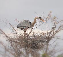 Nesting ... by Danceintherain