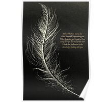 White Feathers  Poster