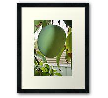 Green Mango Delight Framed Print