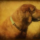 Portrait of Zeke by DottieDees