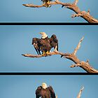 """The Eagle Dance?"" - or better idea for title? by John Hartung"