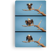 """""""The Eagle Dance?"""" - or better idea for title? Canvas Print"""