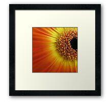 Colourful daisy Framed Print