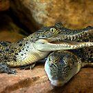 ~Little Crocs~ by a~m .