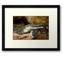 ~Little Crocs~ Framed Print