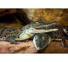 ~Little Crocs~ Photographic Print