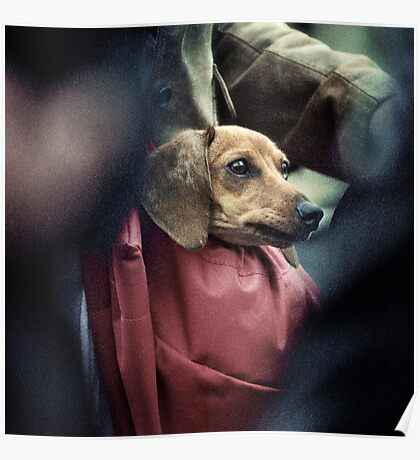 Carry-on Dog. Poster