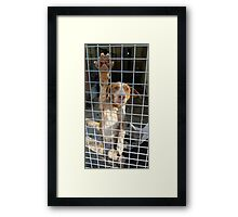 Choose me! Framed Print