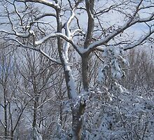 Snow Branches by fionahoratio