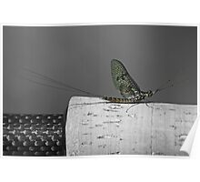 Mayfly on a fishing rod handle. Poster