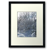 Ornamental Tree Bathed In Fresh Snow Framed Print