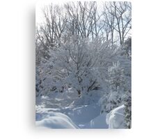 Ornamental Tree Bathed In Fresh Snow Metal Print