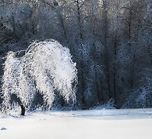 Icy tree by Gouzelka