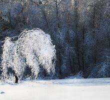 Icy tree by Gouzelka