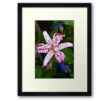 Spotted Lily Framed Print