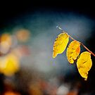 tree yellow leaves by Victor Bezrukov
