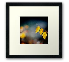 tree yellow leaves Framed Print