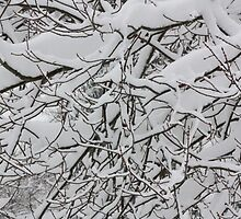 Mid Winter Branches by rjlauck