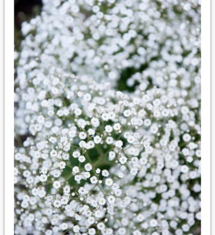 Babys breath Sticker