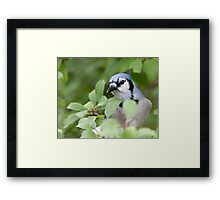 Peek Of Blue, I See U Framed Print