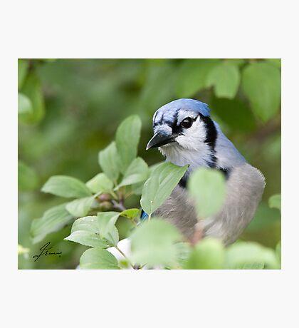 Peek Of Blue, I See U Photographic Print